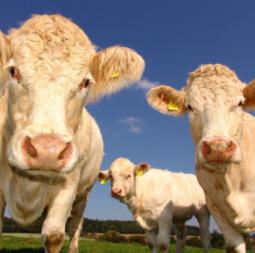 Active-communications-Animal-Husbandry IOT COMMUNICATIONS